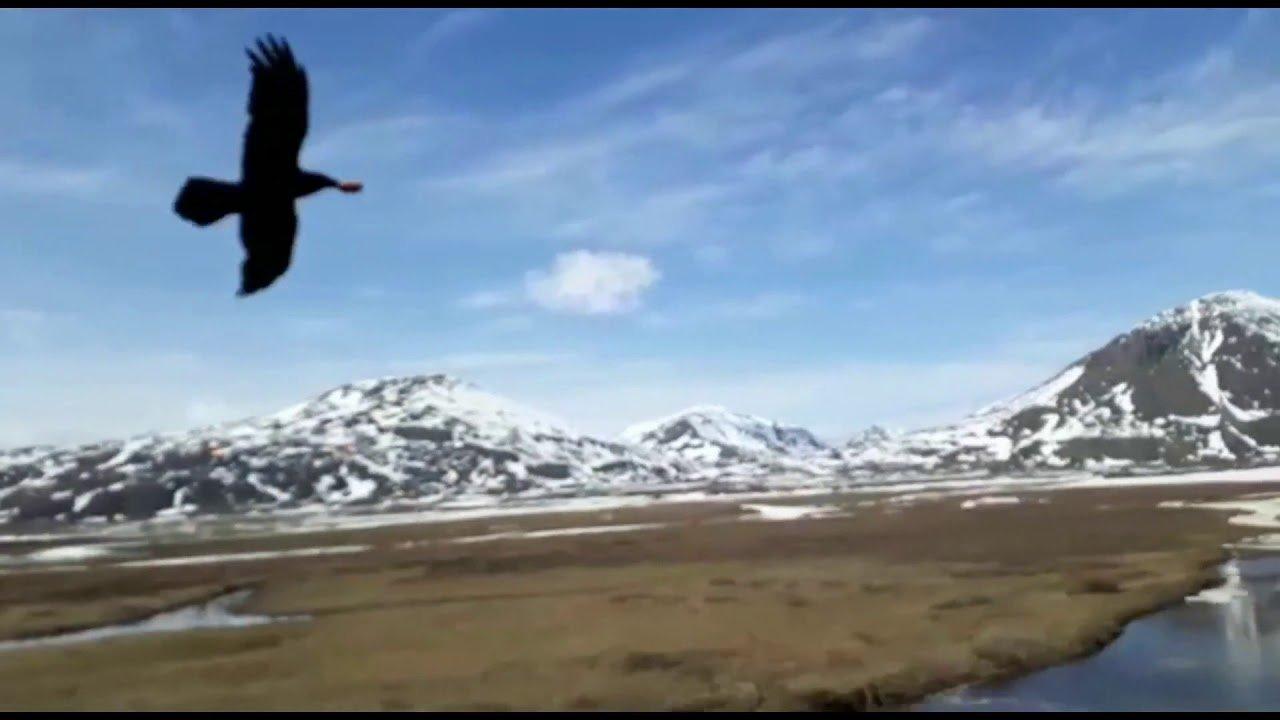 Ворона прямо на льоту випросила пиріжок у далекобійника (відео)
