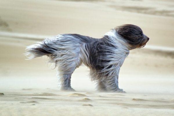 Синоптики предупредили осильном ветре вКиеве, наПрикарпатье— штормовое предупреждение