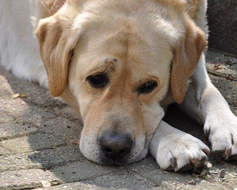 В Хмельницком директор приюта жестоко отравил собак и засветился на видео
