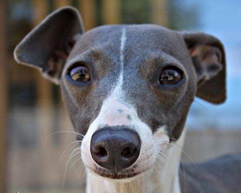 Епічне викрадення: киянці повернули собаку, яку поцупили разом з Range Rover
