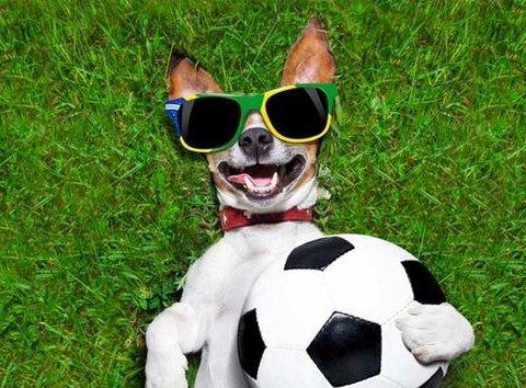 """Як собака перетворила футбольний матч у гру """"в доганялки"""" (відео)"""