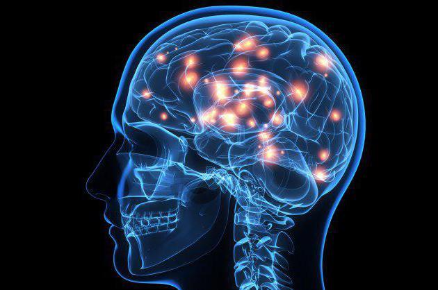 Эффективность работы мозга повышает единственный продукт
