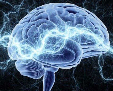 Эти пять фактов о мозге объясняют «странное» поведение