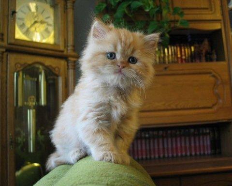 Коты, которые подготовились к зиме, поднимут ваше настроение (фото)