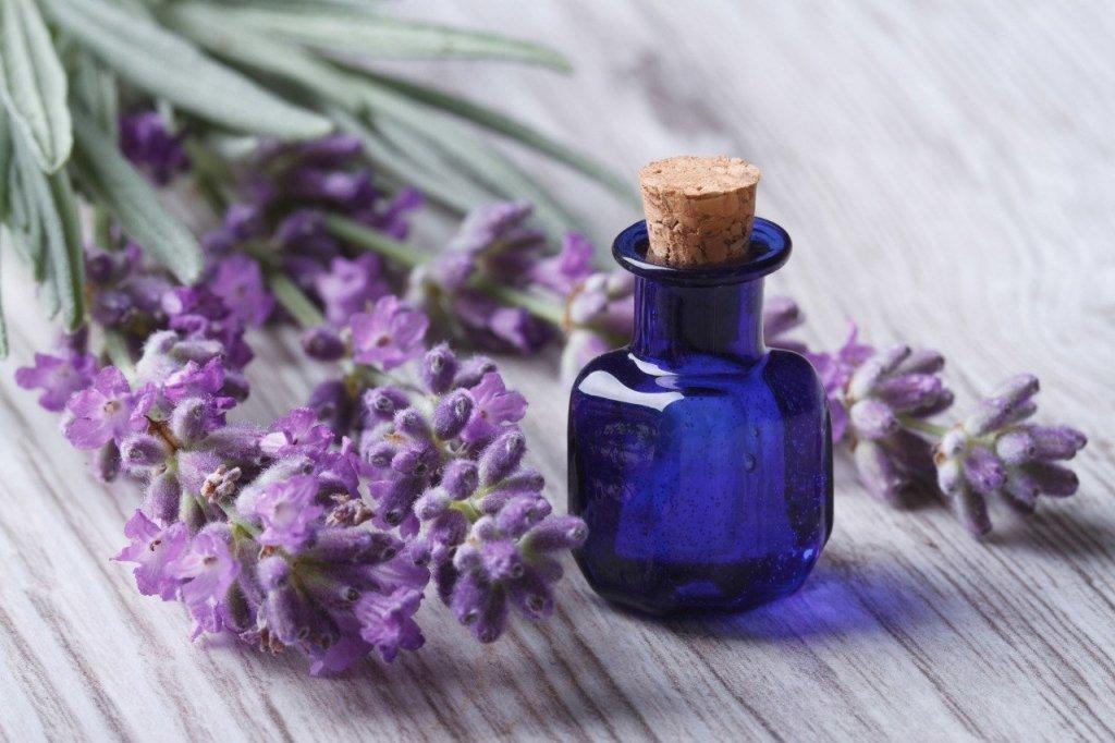 Этот цветок поможет снять стресс лучше лекарства