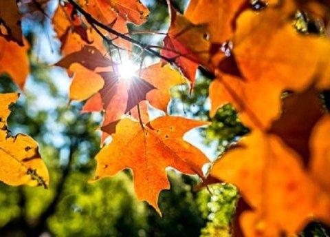 Синоптики поділились прогнозом погоди на неділю: як провести останній день тижня