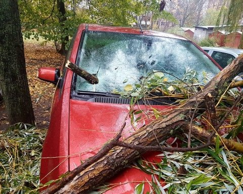 Дерево у Києві розтрощило авто (фото)