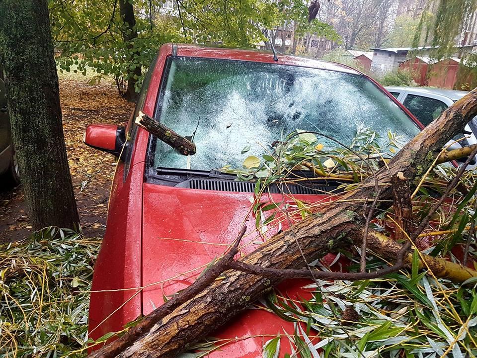 Дерево в Киеве раздавило авто (фото)