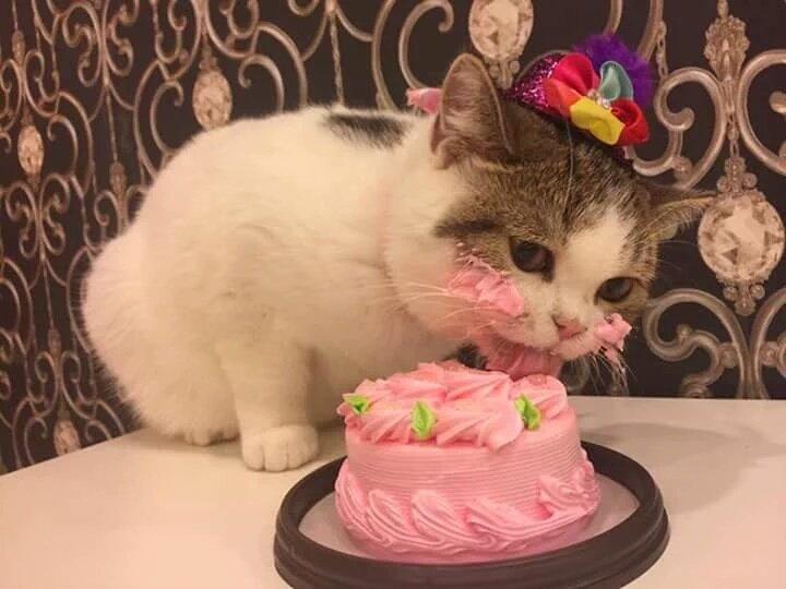 Полный провал: вор украл торт «Рошен», а получил мертвого кота