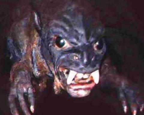 Чупакабра на Львовщине: граждане готовят небывалую облаву на неизвестного зверя (видео)