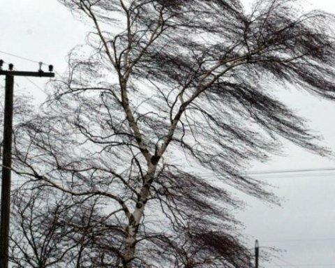 Негода на Київщині: від сильного вітру на жінку впало дерево
