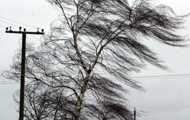 Непогода в Киевской области: от сильного ветра на женщину упало дерево