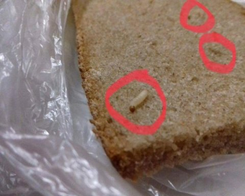 Киевляне возмущены: в известном супермаркете продавали хлеб с червями (фото)
