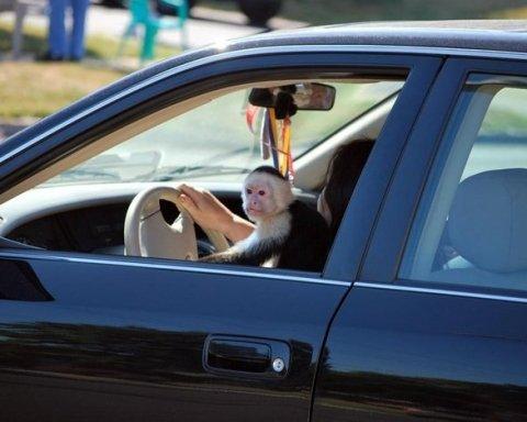 В Киеве заметили очень наглого водителя: фото