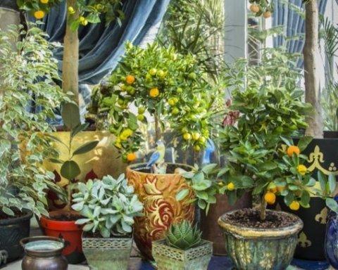 Назвали растения в квартире, которые убивают ваше здоровье