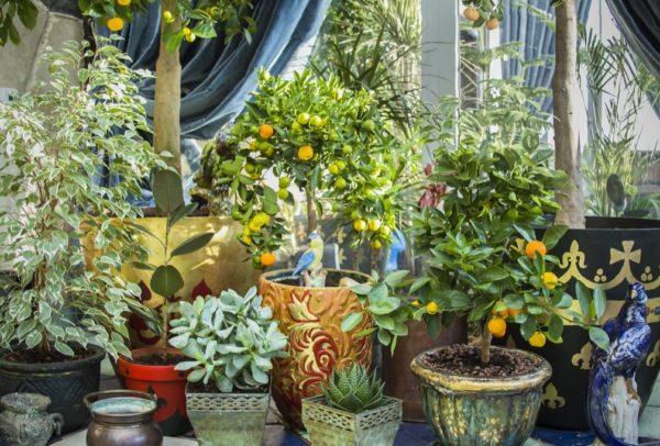 Назвали рослини в квартирі, які вбивають ваше здоров'я
