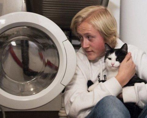 Кота у Норвегії випадково випрали у пральній машині