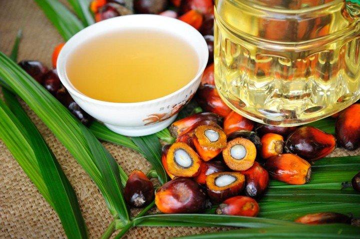 Ученые рассказали, чем пальмовое масло вредит здоровью