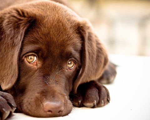 Догхантер устроил расправу над щенками и поотрезал им головы