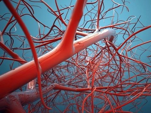 Як швидко і ефективно покращити кровообіг та очистити судини