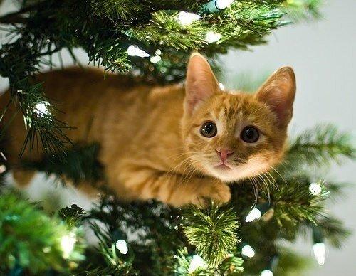 1fed61dfa72bb5aace4e31f01fd7b0c3--christmas-kitty-christmas-trees