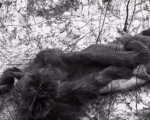 Содрали кожу: киевлян ошеломило жестокое убийство беременного животного