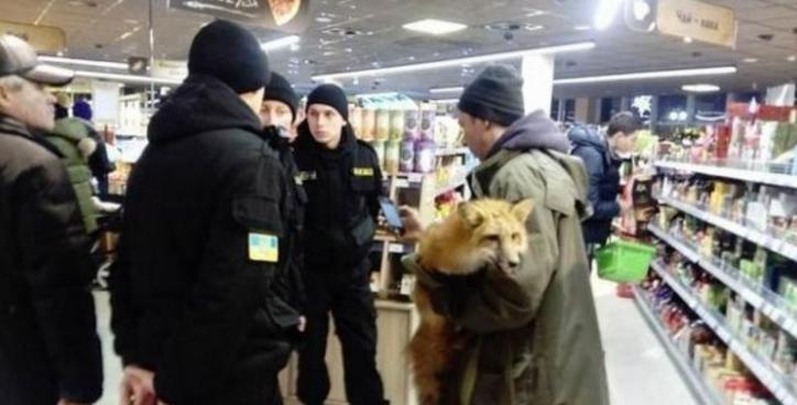 Лиса в супермаркете Киева стала причиной грандиозного скандала
