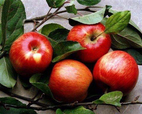 Кому і чому варто щодня їсти яблука