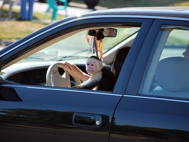 """Кияни в особливий спосіб провчили """"героя парковки"""""""