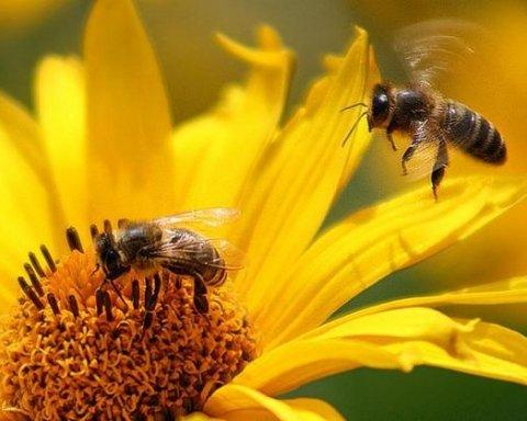 Американец в шлепках потерялся в лесу, неделю питался ягодами и пчелами