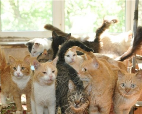 »Дикая вонь»: киевлянка в квартире содержит больше 50 котов, соседи возмущены