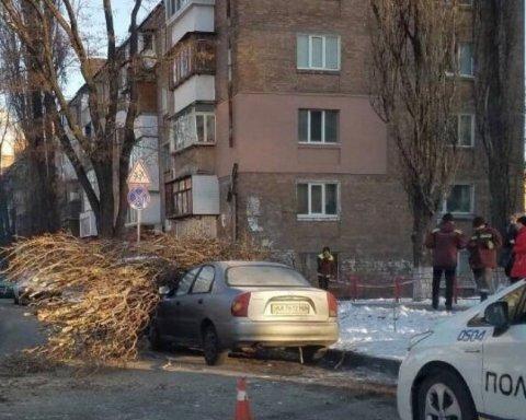 Дерево у Києві розчавило відразу два автомобілі