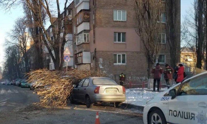 Дерево в Киеве повредило сразу два автомобиля