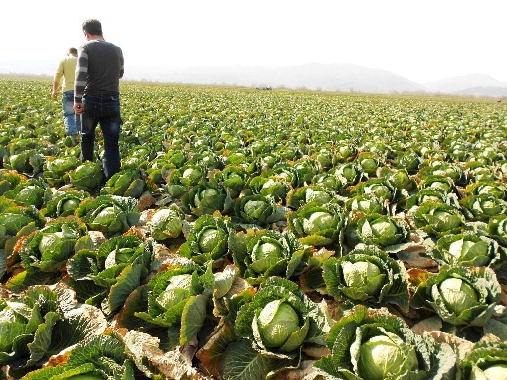Назвали дешевый овощ для надежной защиты от рака