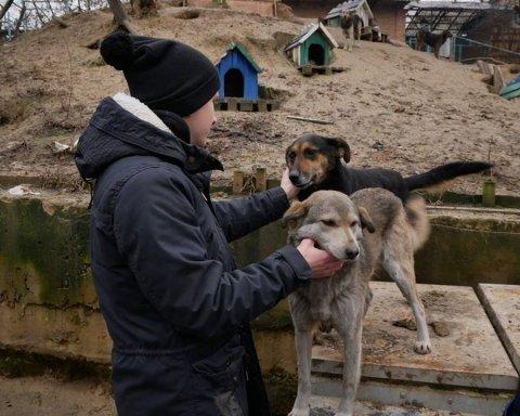 В Харькове подростки порубили лопатой бездомных животных: печальные подробности