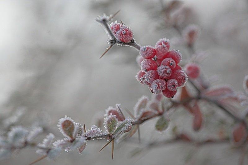 Буде дуже холодно: українців попереджають про люті морози на Водохреща