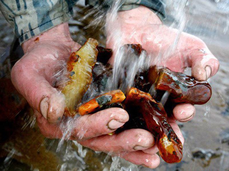 Ад на Ровенщине: на копов напали более 200 добытчиков янтаря
