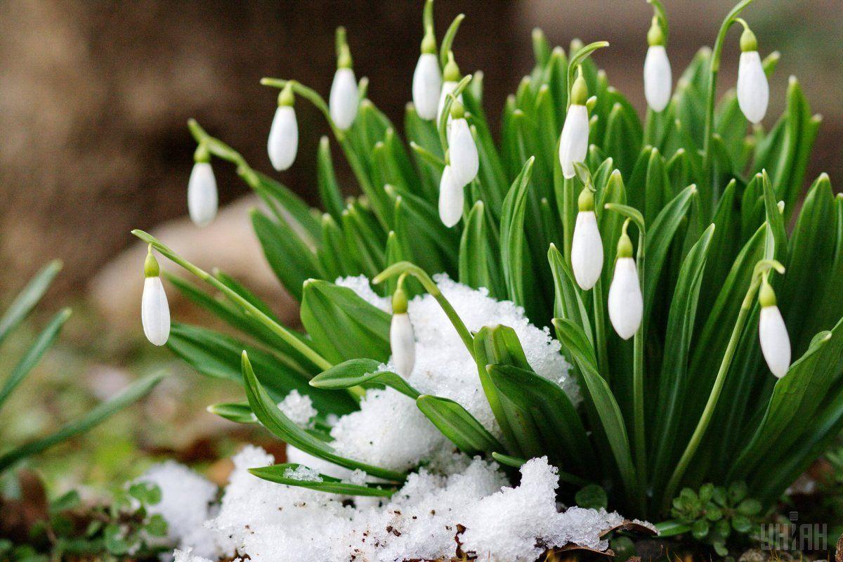 Снег и температурные качели: синоптик рассказал, какой будет погода в марте в Украине