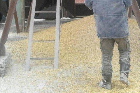 Моторошна смерть: чоловіка під Києвом засипало кукурудзою