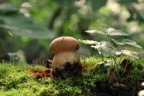 Кому і чому не можна вживати гриби: медики пояснили