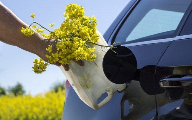 Депутаты заставят водителей заправляться биотопливом: появились подробности
