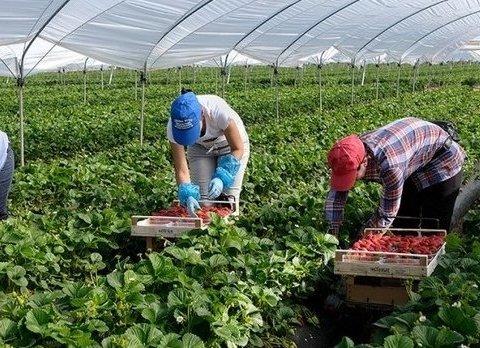 Українці масово шукають роботу: де  і скільки можна заробити влітку