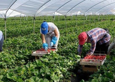 Сучасне рабство: чим завершуються для українців пошуки роботи за кордоном