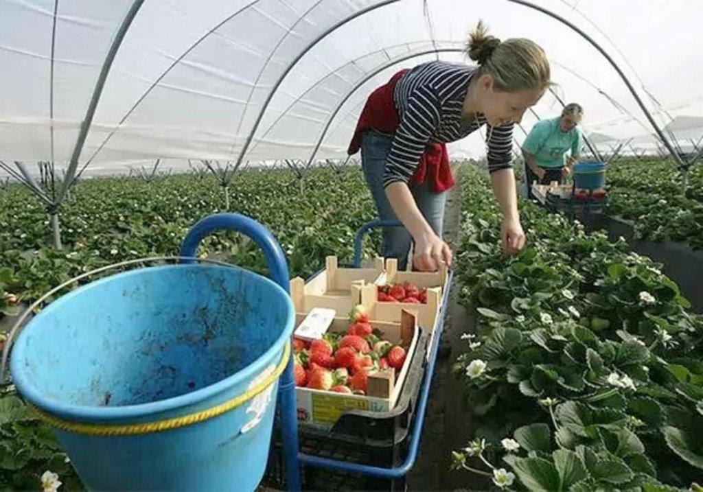 Стала відома кількість українців, що працюють за кордоном