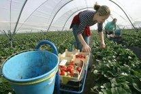 Українські заробітчани терміново вилетіли у Фінляндію: що трапилося