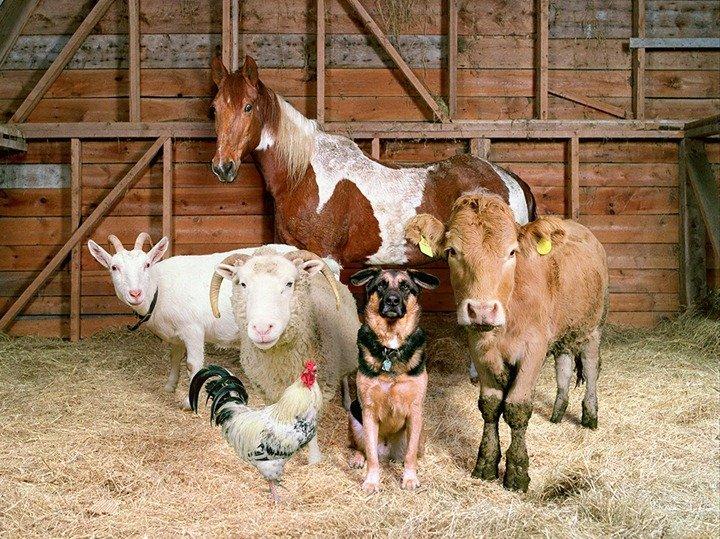 От 2 до 3 лет: украинцев будут строго наказывать за жестокое обращение с животными