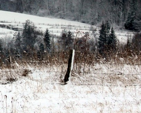 Экс-депутата нашли мертвым в снегу