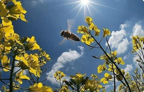 Придет настоящая весна: какими будут выходные на Пасху