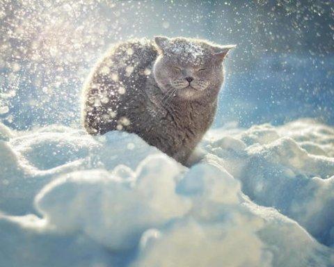 Готуйте лопати: українців попередили про насування снігопадів