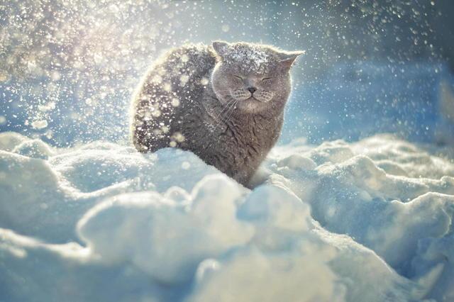 Синоптики предупредили о сильных снегопадах 20 марта — Непогода в Украинском государстве